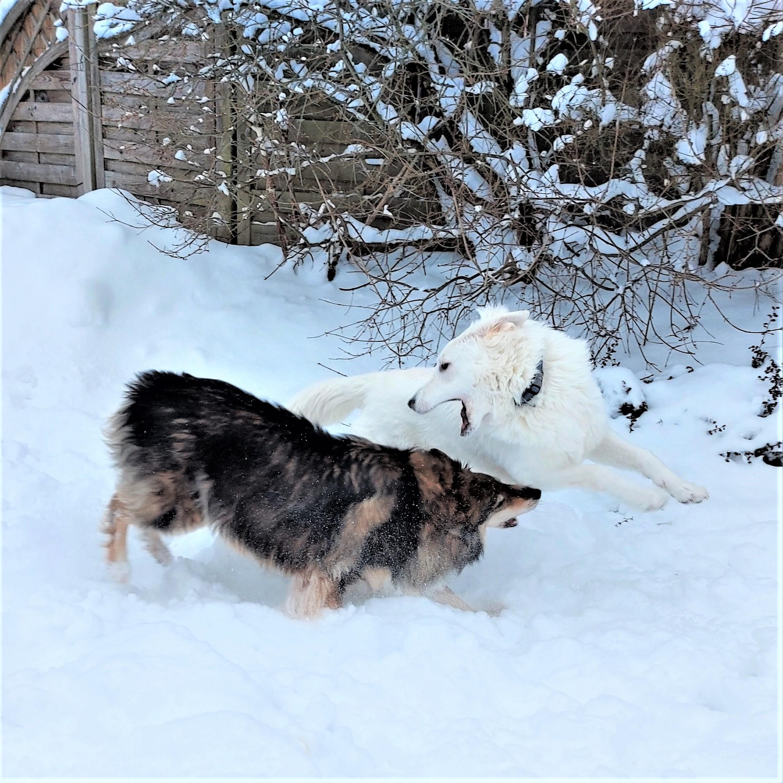 A - Wurf im Schnee